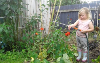 6 Tips for Edible Gardens in Hot Weather